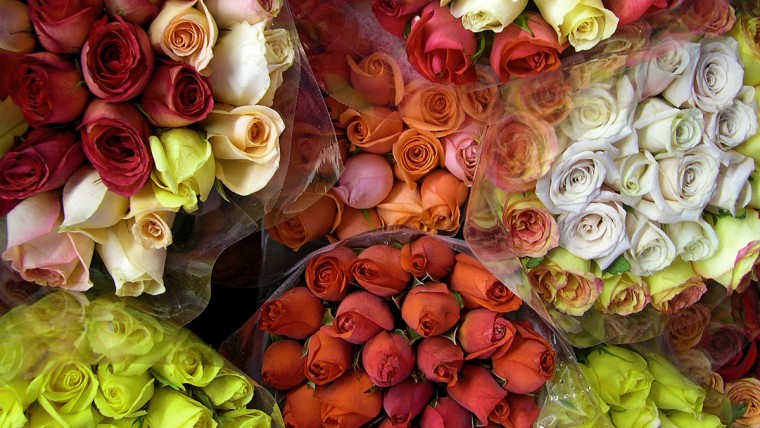 5 Rose Backgrounds to Celebrate Every Day