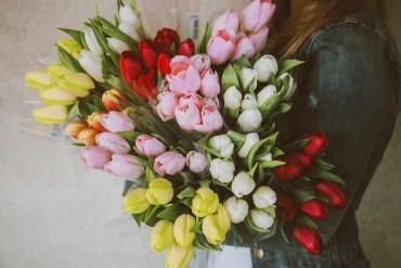 15 Beautiful Types of Tulips